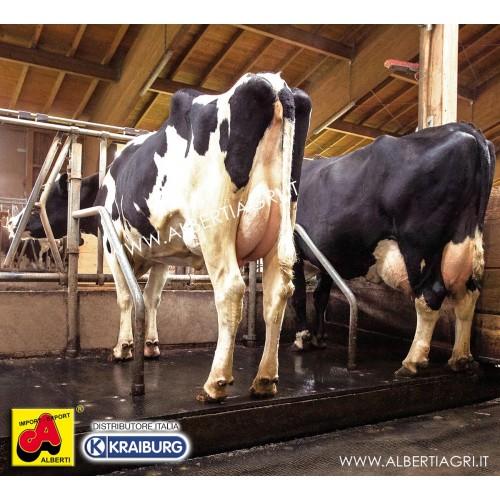 LENTA per vacche a stabulazione fissa