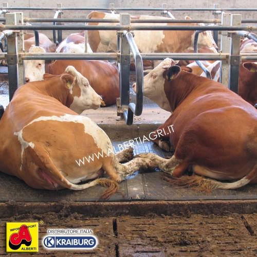 WINGFLEX, la cuccetta più morbida per il bovino da latte