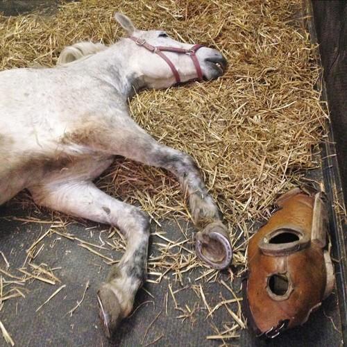 Sistema KINGSIZE in gomma per cavalli senza fughe per superfici ampie, speciale per cliniche veterinarie 525cm /mq spess.65mm